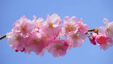 Marzo japonés
