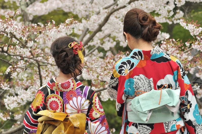 Donde y cuando ver el Sakura en Japon en 2019